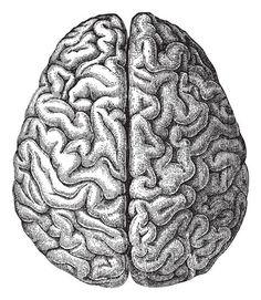 The Dead Man's Brain Was Famous, the Battle Over It, Secret