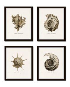 Sepia Seashell Print Set No. 5, Ernst Haeckel, Giclee, Canvas Art, Wall Art, Prints and Posters, Coastal Art, Nautical Art, Illustration by BelleMerGraphics on Etsy https://www.etsy.com/listing/269125241/sepia-seashell-print-set-no-5-ernst