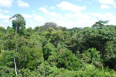 Amazon Rainforest- Extends over 9 individual countries in South America