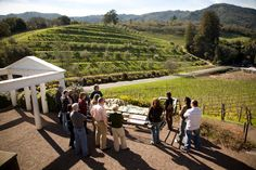Winery Review - Benziger Family Winery: Touring Benziger Estate