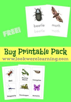 Free Bug Printables Pack - Great for spring and summer units with kids!