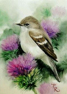 Art Painting Birds Pictures Ideas For 2019 Birds Painting, Art Painting, Animal Art, Art Drawings, Drawings, Art, Watercolor Bird, Bird Pictures, Bird Art