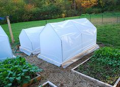 """Gothic Electrical Conduit """"hoop"""" houses, mini greenhouses."""
