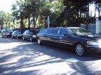 Fleet of 10 Passenger Lincoln Limos for Bahamas Cruise Ports, Airports, Groups, Conventions, Wedding Guest in Black and White.
