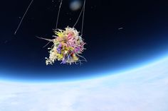 Flowers in the Stratosphere - NYTimes.com