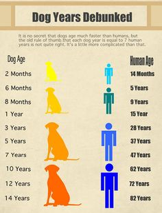 Your Dog's Age In Human Years A Conversion Chart Pets