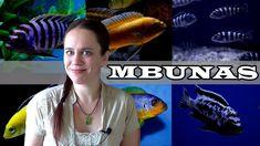 The Mbuna Aquarium - Lake Malawi African Cichlids Fishing For Beginners, African Cichlids, Fish Tank, Aquarium, Animals, Aquarius, Animales, Animaux, Animal