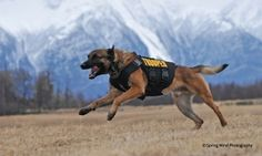 Groupon - $ 10 Donation to Help Supply Bullet- and Stab-Protective Vests for Police Dogs  in [missing {{location}} value]. Groupon deal price: $10