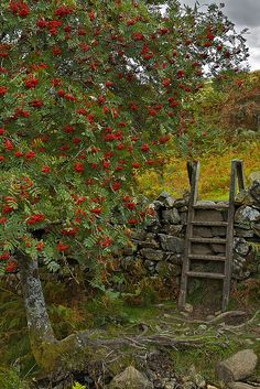 Stile near Rowan Tree, Crafnant, Snowdonia This would have to be in my cottage garden.