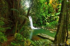Curtis Falls in Tamborine Mountain, Queensland, Australia. Camera: Canon Lens: Sigma ISO 1 sec. Australia Travel, Queensland Australia, Countries Of The World, Places Around The World, Gold Coast, So Little Time, Where To Go, Night Life, Places To See