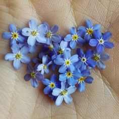 Forget me not...I love making flowers for you