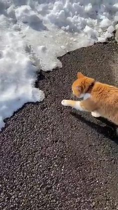 Cute Baby Cats, Funny Cute Cats, Cute Cats And Kittens, Cute Funny Animals, Animal Antics, Animal Jokes, Cute Animal Videos, Funny Animal Pictures, First Encounter