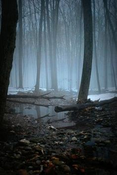 """Let's take a """"nature"""" walk in these misty woods. Mundo Design, Beautiful World, Beautiful Places, Foto Nature, Landscape Photography, Nature Photography, Photography Tips, The Great Outdoors, Wilderness"""