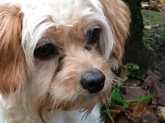Confused Face, Mindfulness, Dogs, Animals, Animaux, Doggies, Animales, Consciousness, Animal