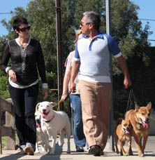 6 tips for walking your dog-Cesar Millan