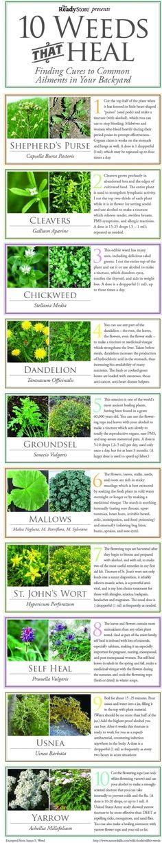 10 Weeds that Heal big...