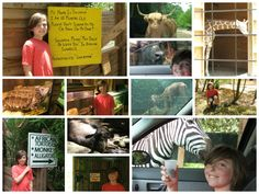 Liam had a great time at the Harmony Safari Park!  Did you know Huntsville has a drive-through zoo?