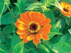 Kletterbogen Blumen : Besten schnittblumen aus dem garten bilder auf