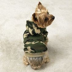 Camo hoodie for a yorkie looks so cute I want it for my yorkie