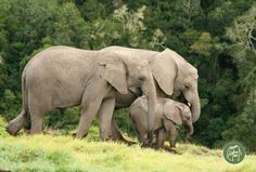 Knysna Elephant Park--by Andre du Toit Oh The Places You'll Go, Places To Visit, My Land, My People, South Africa, The Neighbourhood, To Go, Wildlife