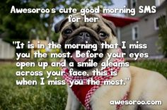 happy dog with a morning sms