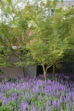 // Chevron Apartments by Eckersley Garden Architecture