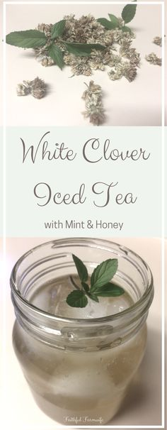 Add a refreshing twist to your summertime sweet tea with this white clover iced tea with mint & honey! Kitchen Witchery, Peppermint Tea, Tea Benefits, Wild Edibles, Flower Tea, Brewing Tea, Tea Blends, Drying Herbs, Sweet Tea