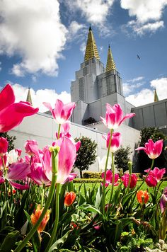 Oakland, California Temple with Pink Tulips.  This LDS (Mormon) Temple is so beautiful and unique in it's architecture that many people visit it each year.