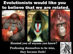 Creationism - Evolution