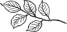 The Graphics Fairy: leaves