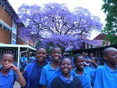 ユーラシア旅行社の南アフリカツアーでジャカランダの花咲く南アフリカへ