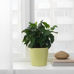 Putem interneta ili u robnoj kući - IKEA Large Plant Pots, Indoor Plant Pots, Large Plants, Indoor Planters, Potted Mums, Potted Plants, Hanging Planters, Planter Pots, Ikea Plants