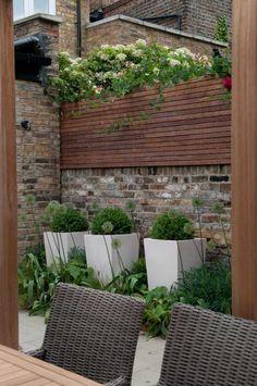 Little Chelsea Courtyard Garden Flowers, Plants & Planters