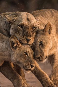 . Close by: { Mark Leddra } (via naturaly-wild)
