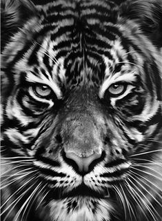 "Find the latest shows, biography, and artworks for sale by Robert Longo. Robert Longo burst onto the New York art scene as a brash with ""Men in t… Tiger Drawing, Tiger Art, Tigre Tattoo, Charcoal Art, Charcoal Drawings, Desenho Tattoo, New York Art, Wow Art, Art Moderne"