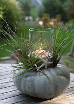 Fall beach pumpkin centerpiece.