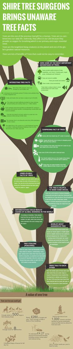 Infographic on Unware Tree Facts  ( www.silkeway.com )