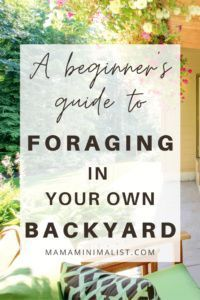 Foraging is a fantastic way to supplement your family's nutrition; it also happens to be an excellent way to get outdoors and explore nature.On this episode of The Sustainable Minimalists podcast: 5 benefits of foraging for the whole family and where and how to start. Health and safety tips for beginners, too. Sustainable Living, Sustainable Gardening, Eco Garden, Herbal Magic, Living Off The Land, Eco Friendly House, Get Outdoors, Healing Herbs, Grow Your Own Food