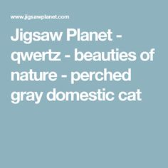 Jigsaw Planet - qwertz - beauties of nature - perched gray domestic cat