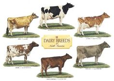 Names of Cattle Breeds | Choosing a least six breeds quot rohtak haryana india exporters ...