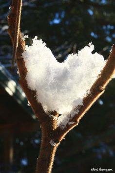 Heart of snow. Bellingham WA, March Add the wedding rings to this and what an amazing wedding photo it would be! I Love Heart, With All My Heart, Happy Heart, Love Is All, Heart In Nature, All Nature, Heart Art, Heart Pictures, Beautiful Pictures