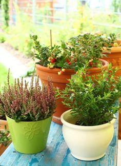 Erbe aromatiche: preziose da mangiare, un hobby anche per chi ha solo un balconcino. Qualche consiglio;