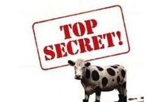 Il rinnovo del consiglio direttivo del M5S scaduto il 18 dicembre Il 18 dicembre è scaduto il primo mandato del Consiglio Direttivo del M5S, composto dal presidente Grillo, dal vice-presidente, il nipote di Grillo, e dal segretario, il commercialista di Grillo. Cir #m5s #beppegrillo