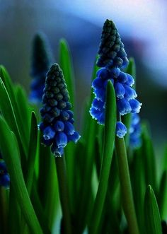 55 Trendy Flowers Photography Black And White Pictures Flowers In Hair, Spring Flowers, Blue Flowers, Flowers Garden, Flowers Vase, Green Colour Palette, Color Palettes, Spring Photography, Quotes About Photography