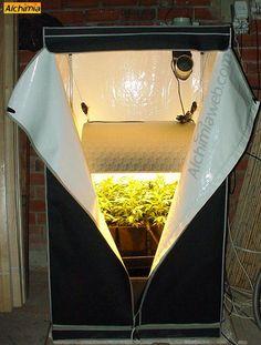 Cultivo de marihuana en armarios de cultivo