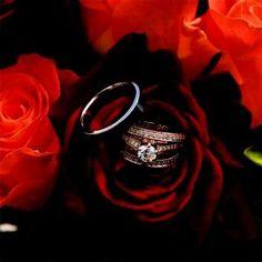 Imagenes De Rosas Exoticas Gratis