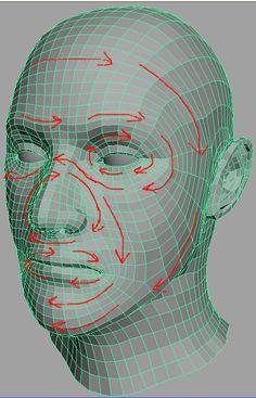 Human Head Model. Focused on Topology