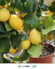 Snails In Garden, Fruit Garden, Garden Veranda Ideas, Avocado Plant, Plantas Bonsai, Enchanted Garden, Fresh Herbs, Bushcraft, Planting Flowers