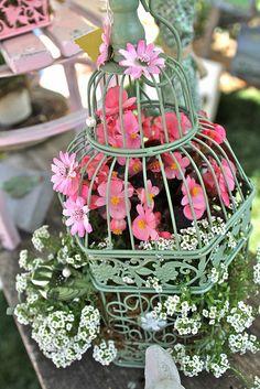 syflove:  birdcage