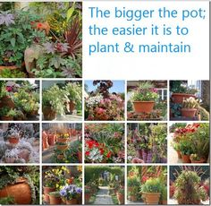 Container garden rule of thumb